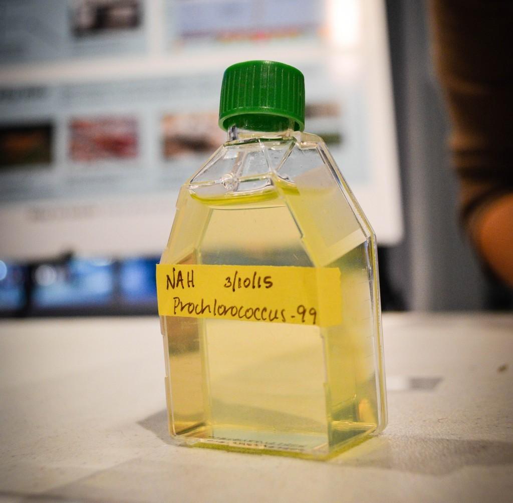 prochlorococcus-e1427767812731-1024x1004