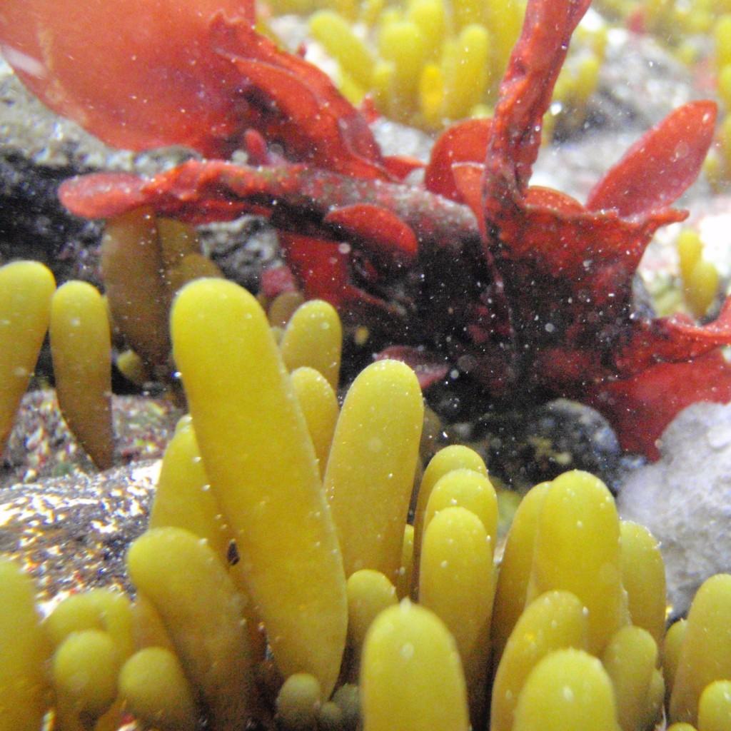 brownalgae2-e1345703394650-1024x1024