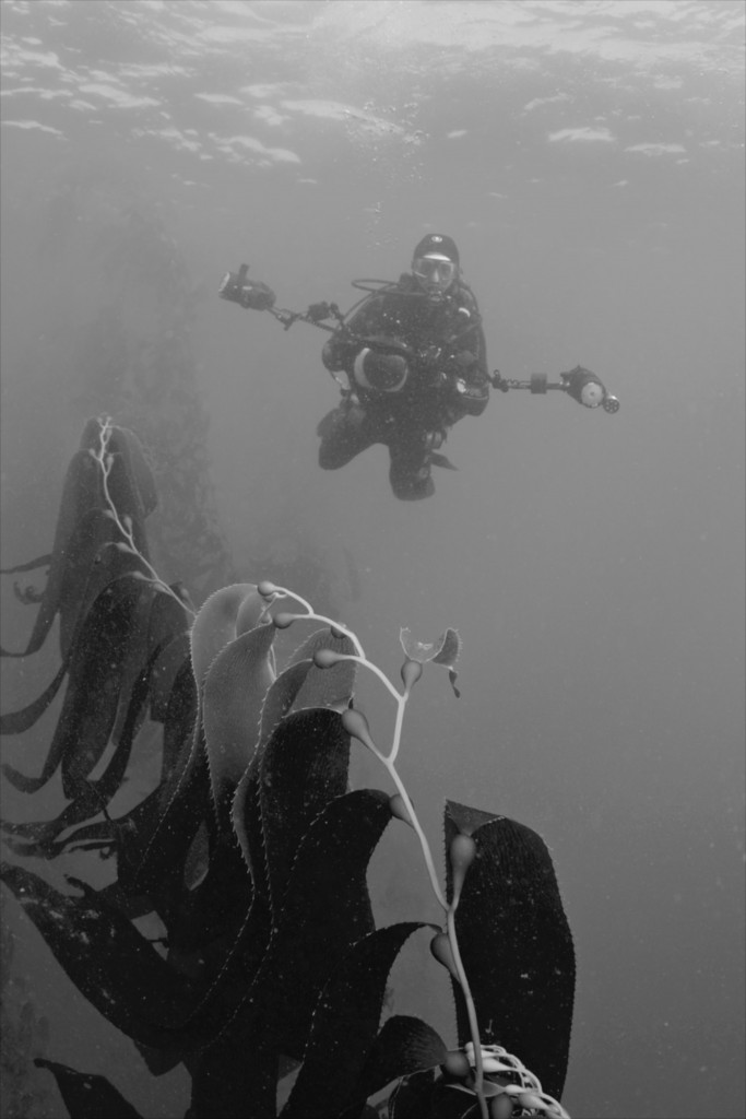 Ellenbogen on a previous assignment within the Kelp Forests off the coast of Monterey, CA. (Credit Photo Courtesy of Keith Ellenbogen)