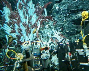 The submersible Alvin investigates giant tube worms and yeti crabs colonizing a hydrothermal vent. (Courtesy of WHOI)