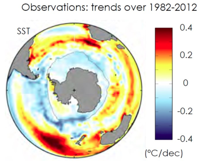 Observed sea surface temperature (SST) trends for 1982-2012 in °C/decade. The blue areas around Antarctica correspond to cooling and the red/yellow areas further equatorward, correspond to warming. The index plotted from model simulations in the 'spaghetti diagram' in the figure below is the SST averaged between 55S (roughly corresponding to the tip of South America) and 70S latitudes.