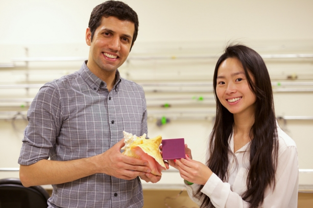Researchers at MIT have explored the secrets behind the conch shell's extraordinary impact resilience. The findings are reported in a new study by MIT graduate student Grace Gu (right), postdoc Mahdi Takaffoli (left), and McAfee Professor of Engineering Markus Buehler. (Photo: Melanie Gonick/MIT)