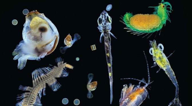 Pacific Plankton_Tara Oceans 2015